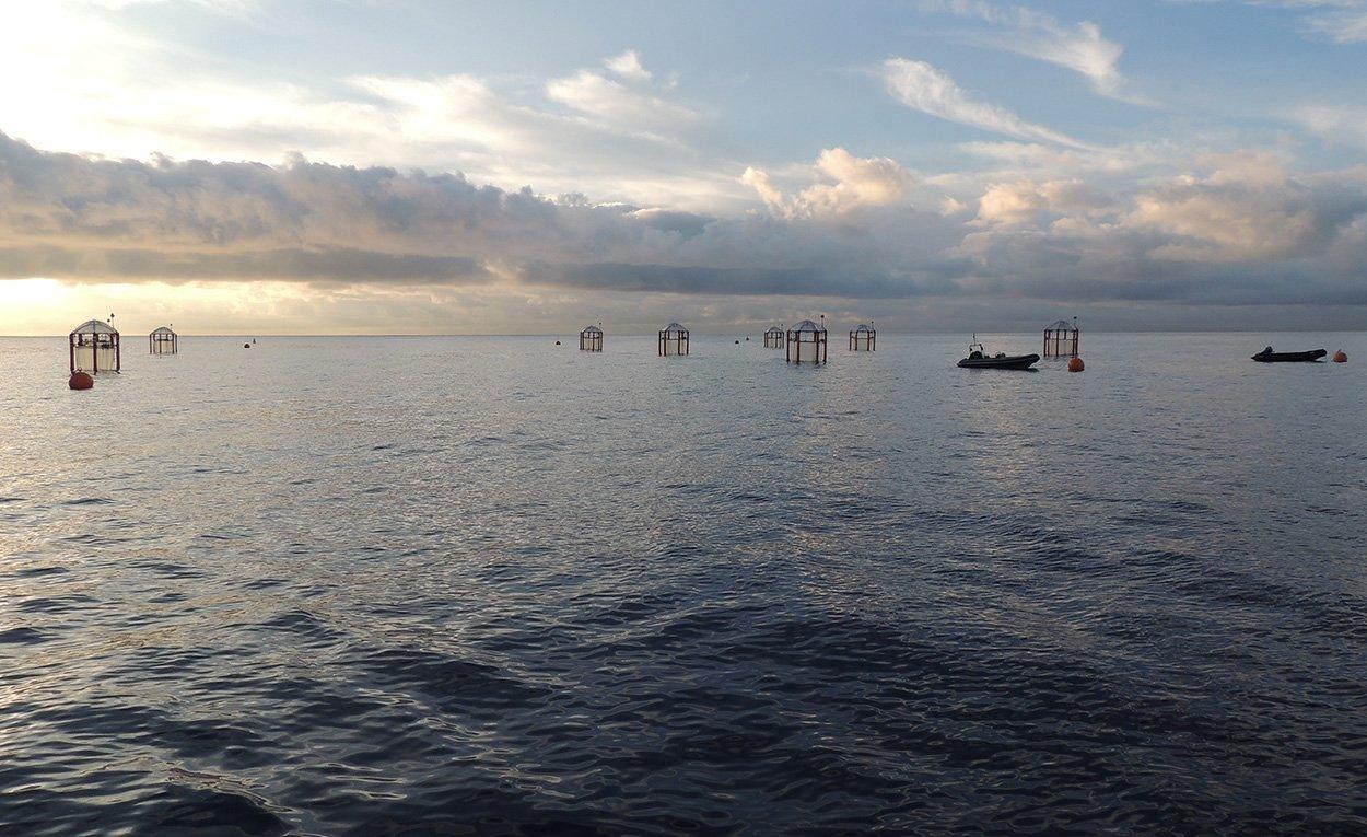 Giftige Alge profitiert von Ozeanversauerung