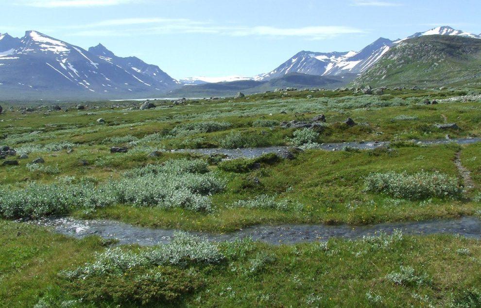 Arktispflanzen