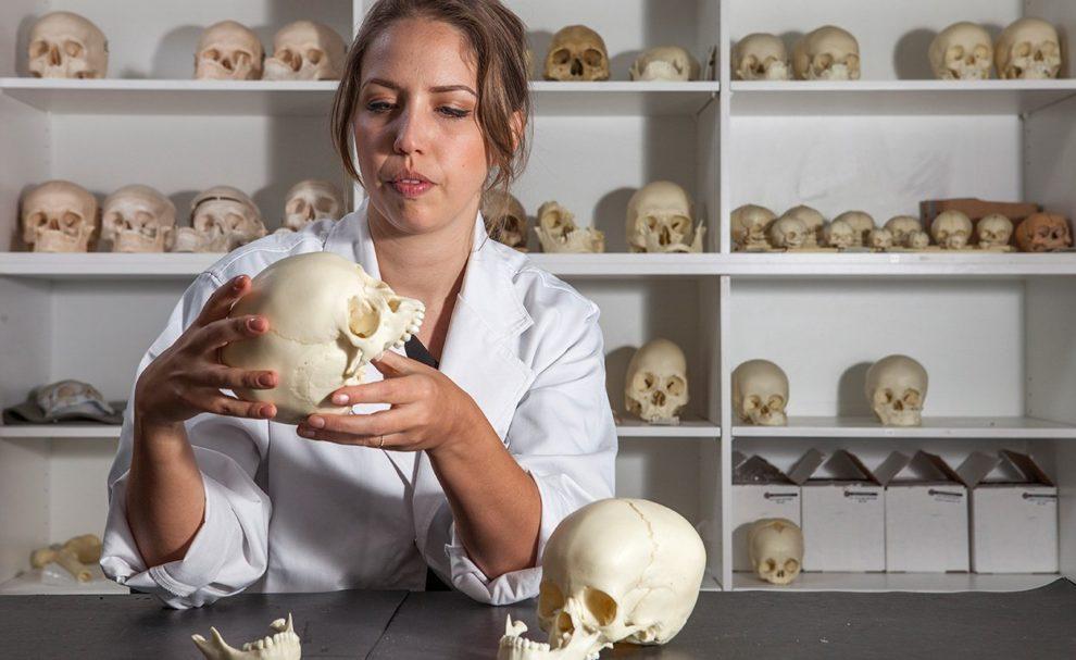 Steinzeitschädel