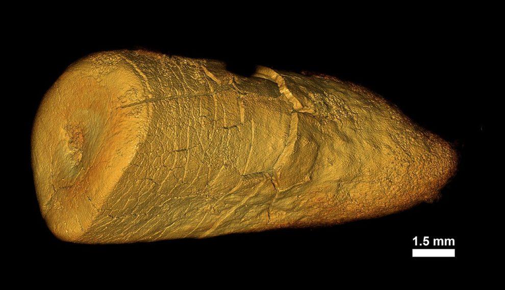 Neandertalerzahn