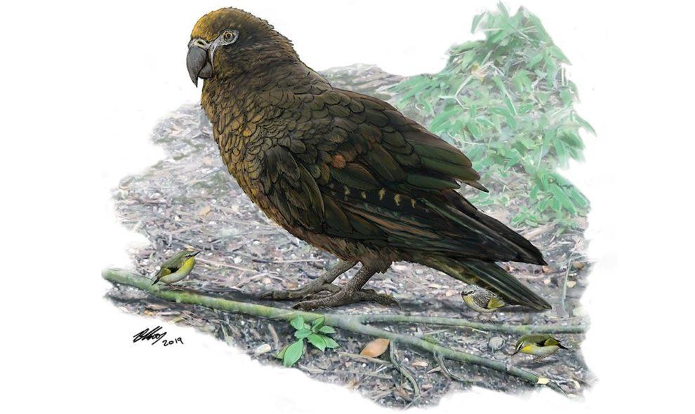 Riesen-Papagei