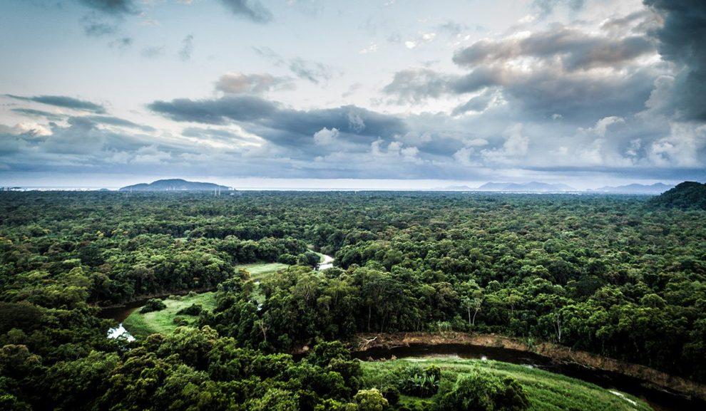 REgenwald in Brasilien