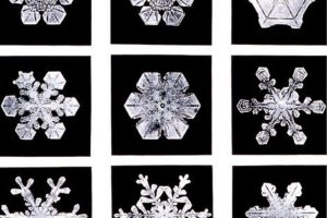 469px_snowflakeswilsonbentley.jpg