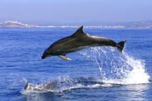 Delfin im Mittelmeer