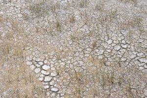 Versalzener Boden