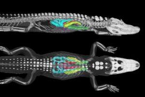 alligatoren202.jpg