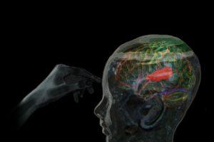auditory_cortex.jpg