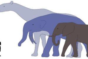 big_animals.jpg