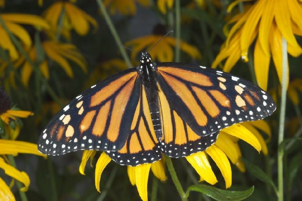 butterfly_alpha.jpg