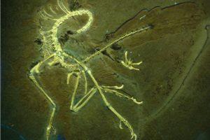 der_neue_archaeopteryx_nr_11_p1170423.jpg