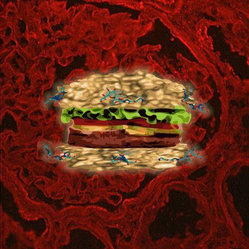 e.coli_onl01.jpg