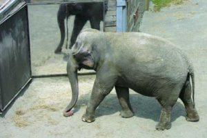 elefant02.jpg