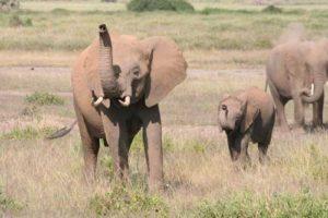elefanten2.jpg