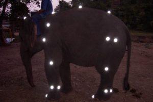 elefantenrennen.jpg