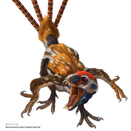 epidexipteryx_gef_hrlich_onl.jpg