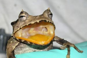 frosch_web.jpg