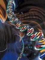 gene2.jpg