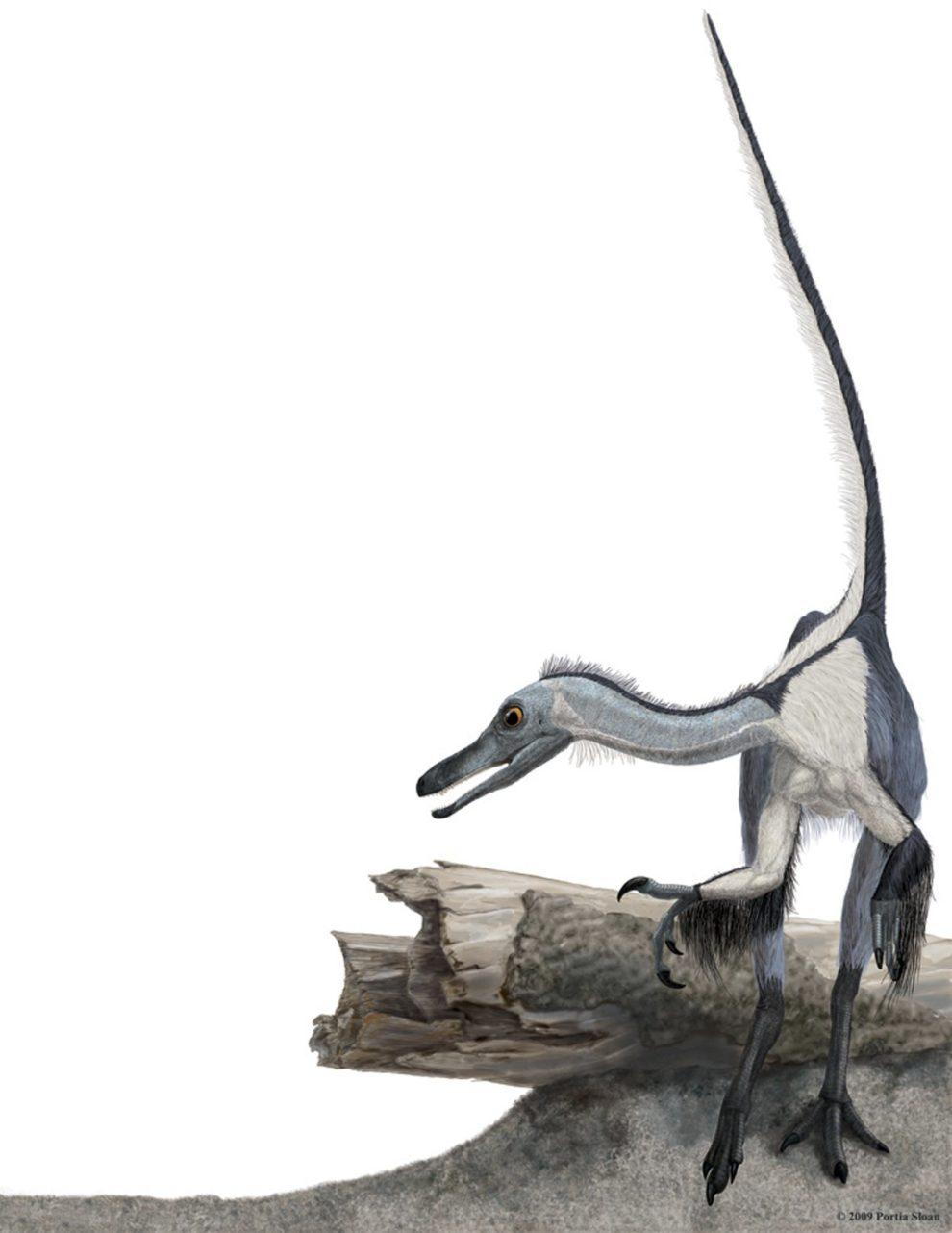 haplocheirus.jpg