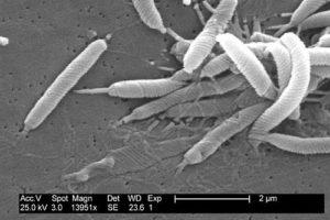heliobacter2.jpg