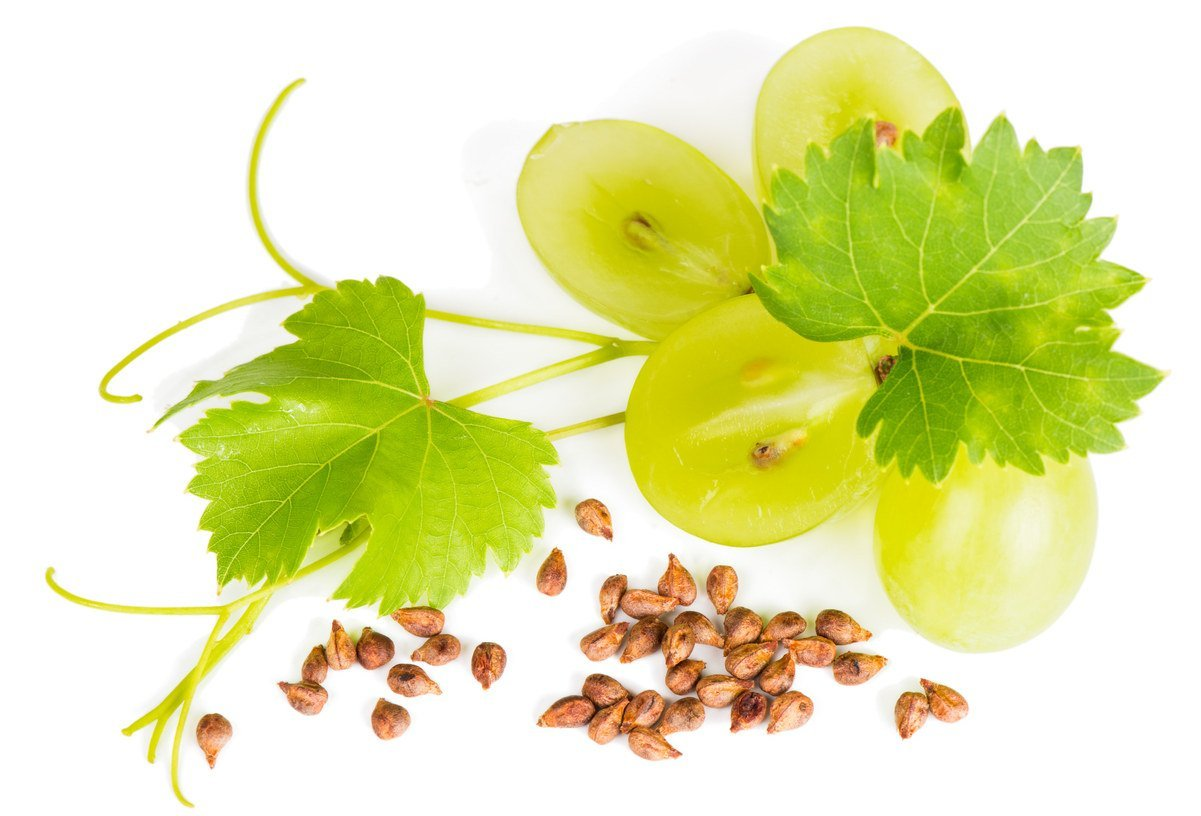 Wie werden kernlose Trauben gezüchtet?