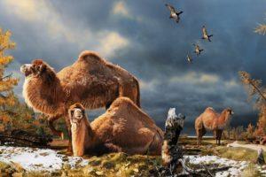kamel102.jpg