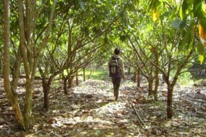 maas_kakaoplantage.JPG