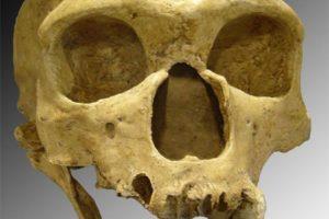 neandertaler02.jpg