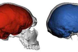 neanderthal_modern_adult01.jpg
