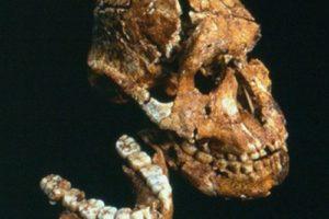 paranthropus.jpg