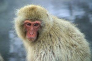 primatenbdw.jpg