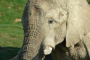 sad_elephant.jpg