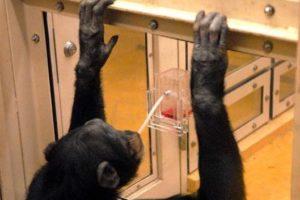 schimpanse13.jpg