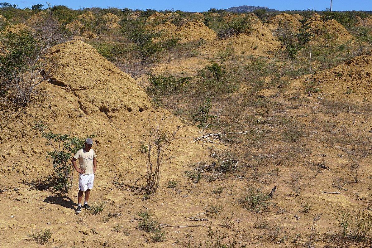 4000 Jahre alte Termitenhügel