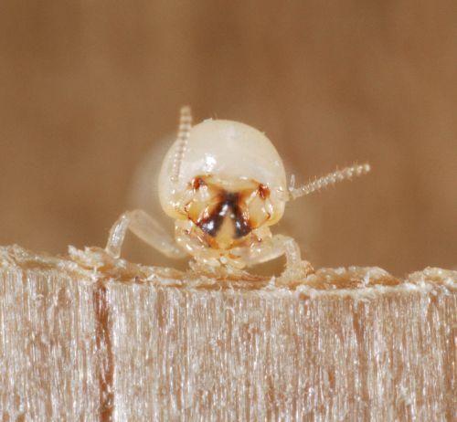termiten_klein.jpg