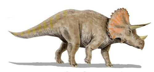 triceratops_bild.jpg