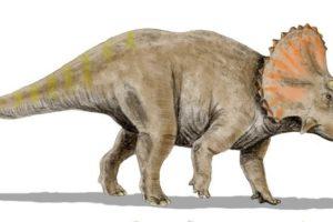triceratops_bw.jpg